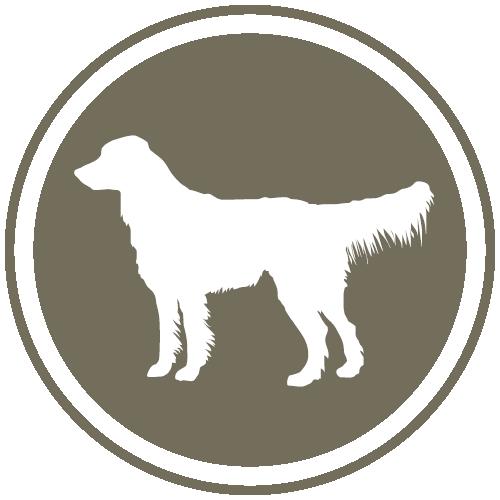 btn-kategorie-hund-500x500
